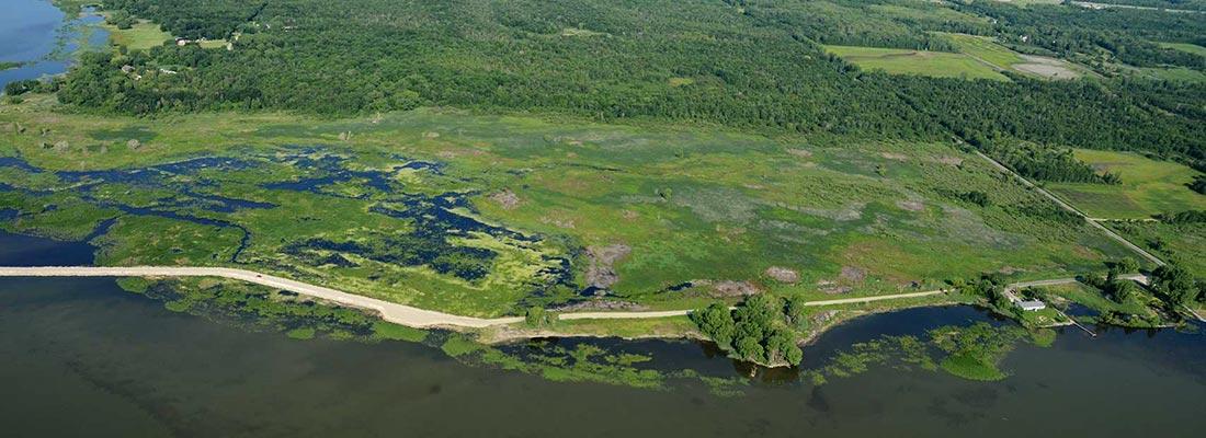 Wetlands in Green Bay, Wisconsin